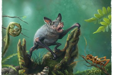 Na Novom Zelandu pronađen fosil džinovskog slepog miša